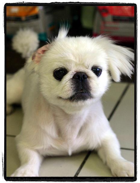 커뮤니티> 애완동물갤러리::